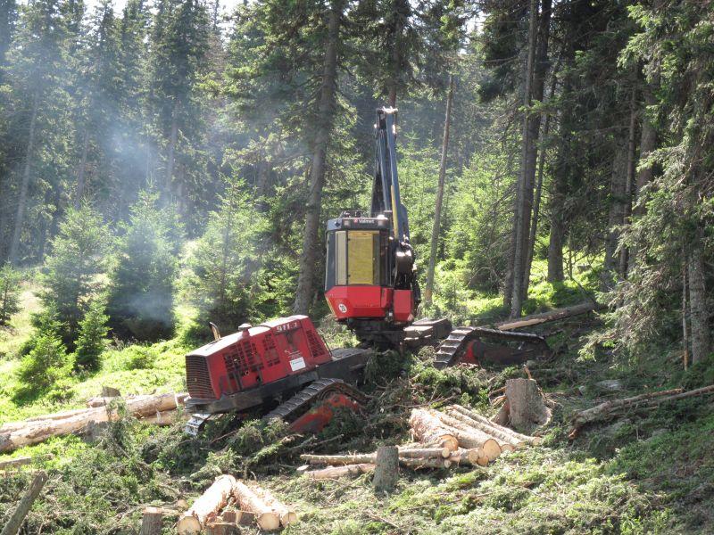 Holzernte Harvester