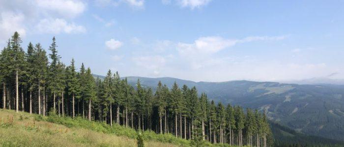 subalpiner Fichtenwald
